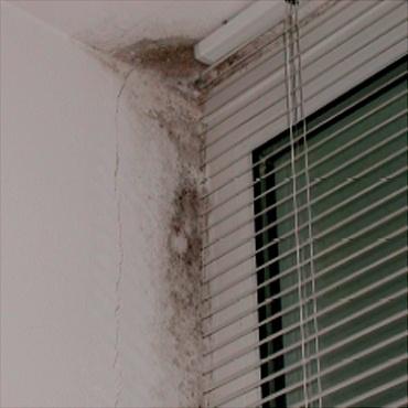 pleśn w oknie